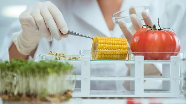 Ngành Công nghệ thực phẩm là gì?