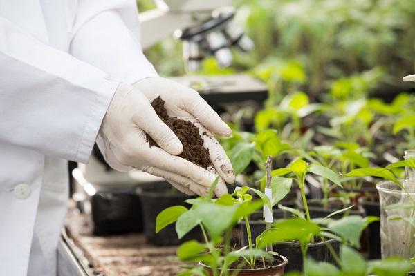 Ngành Khoa học môi trường là gì? Cơ hội làm việc ngành này như thế nào?